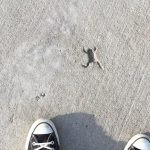 カエルの跡