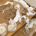 階段を封鎖する猫