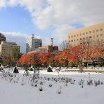 札幌大通公園